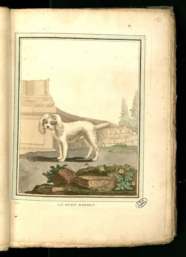 Des noms de races de chiens au XVIIIe siècle Chien-26