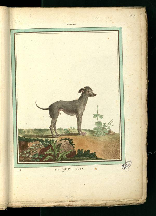 Des noms de races de chiens au XVIIIe siècle Chien-27