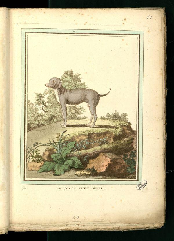 Des noms de races de chiens au XVIIIe siècle Chien-28