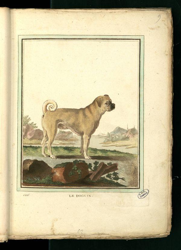 Des noms de races de chiens au XVIIIe siècle Chien-29