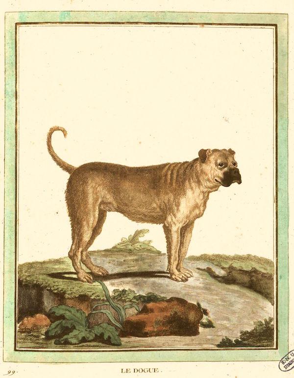 Des noms de races de chiens au XVIIIe siècle Ff8ec310