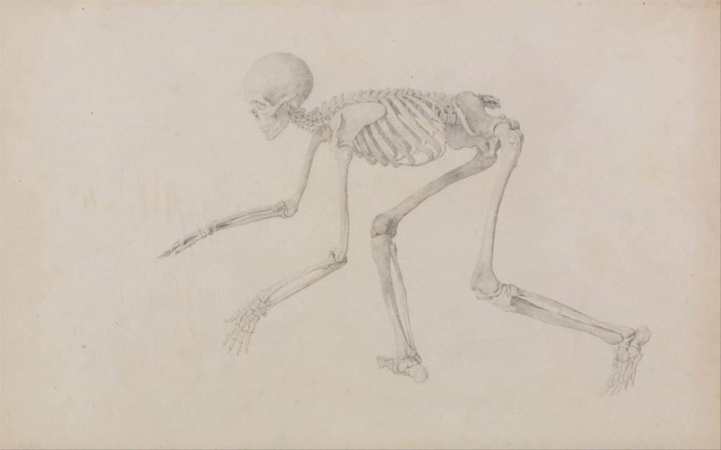 George Stubbs : artiste peintre et anatomiste.  George20