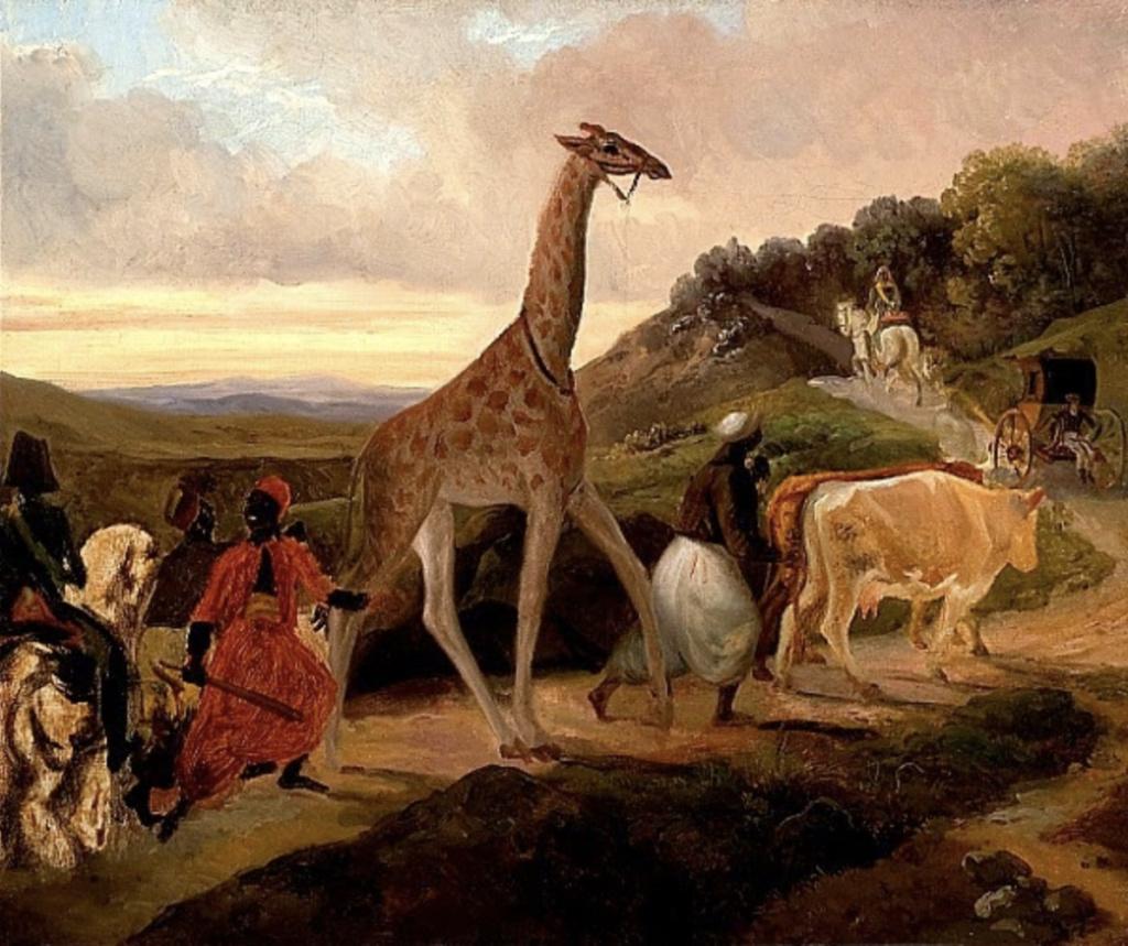 La girafe de Charles X, dite Zarafa Girafe10