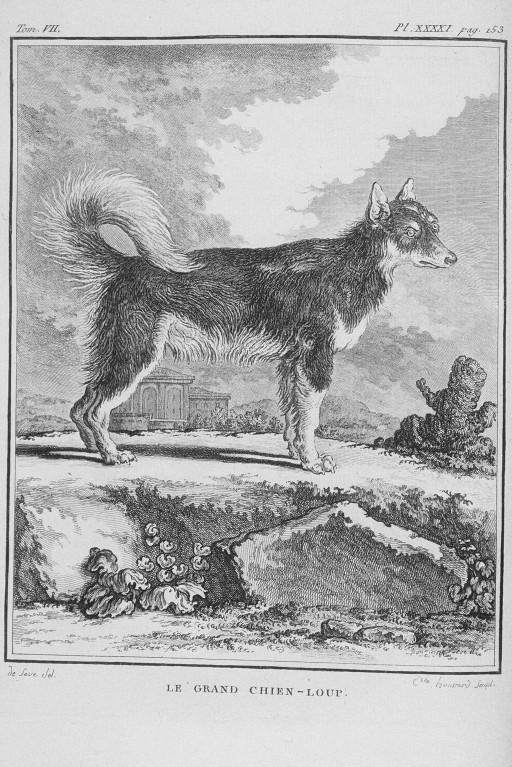 Des noms de races de chiens au XVIIIe siècle Grand-13