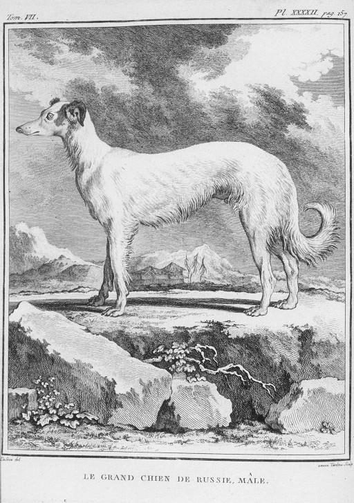Des noms de races de chiens au XVIIIe siècle Grand-14