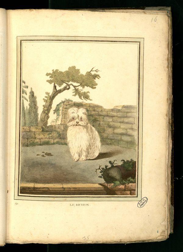 Des noms de races de chiens au XVIIIe siècle Gravur11