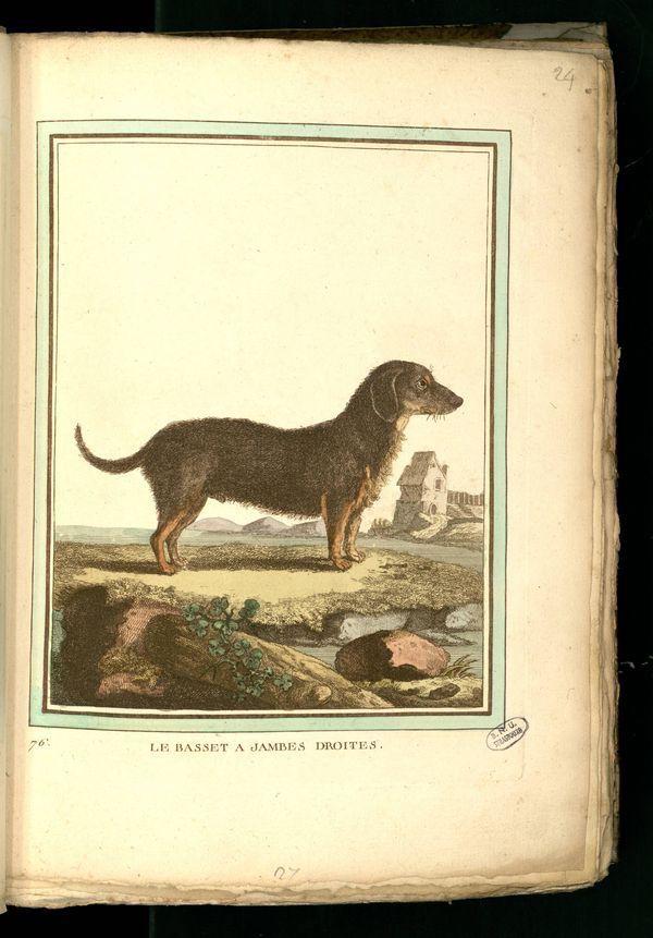 Des noms de races de chiens au XVIIIe siècle Gravur12