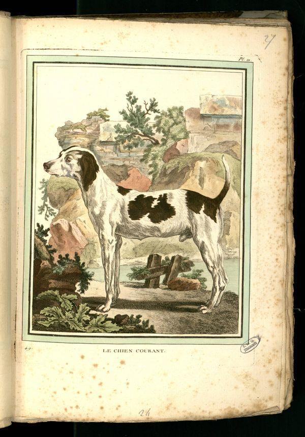 Des noms de races de chiens au XVIIIe siècle Gravur13