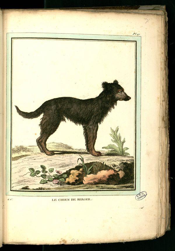 Des noms de races de chiens au XVIIIe siècle Gravur14