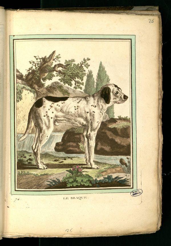 Des noms de races de chiens au XVIIIe siècle Gravur15