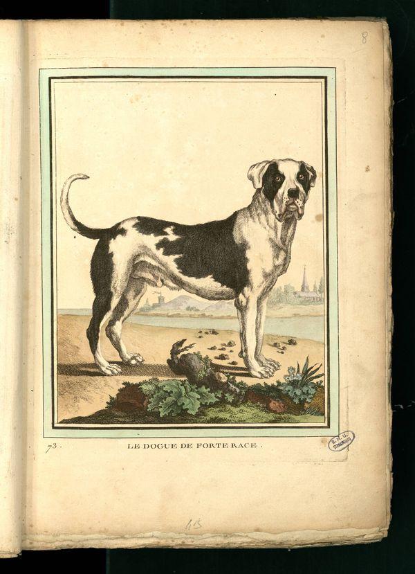 Des noms de races de chiens au XVIIIe siècle Gravur16