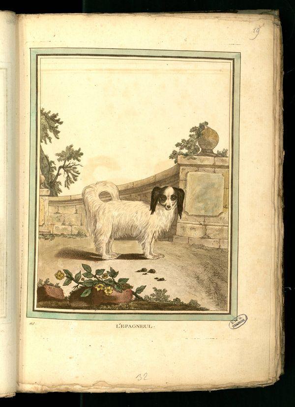 Des noms de races de chiens au XVIIIe siècle Gravur17