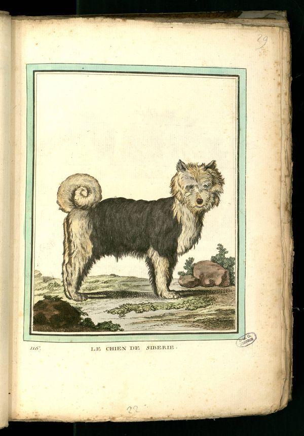 Des noms de races de chiens au XVIIIe siècle Gravur18