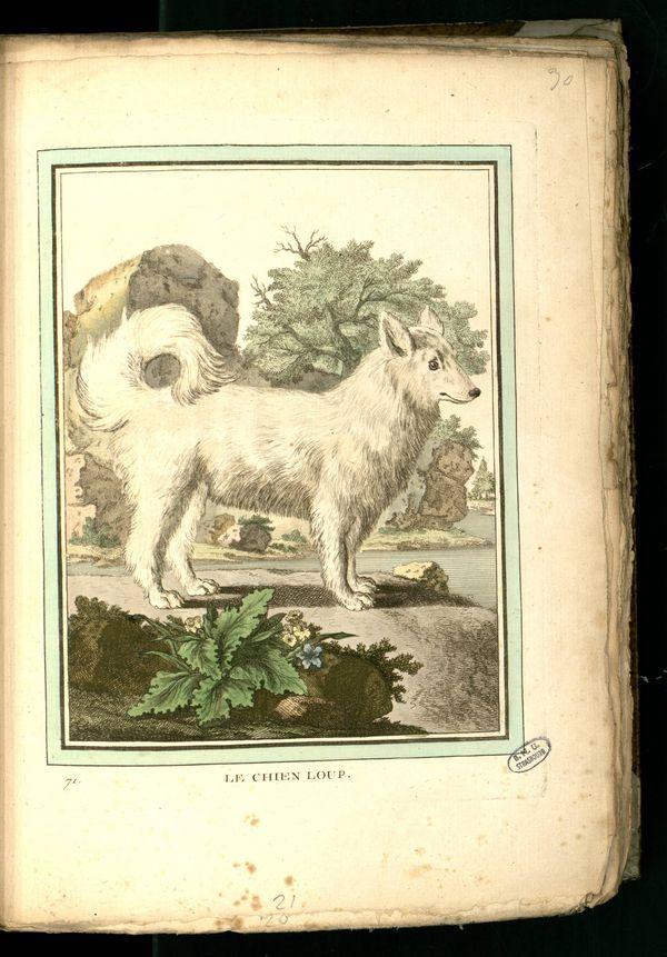 Des noms de races de chiens au XVIIIe siècle Gravur19