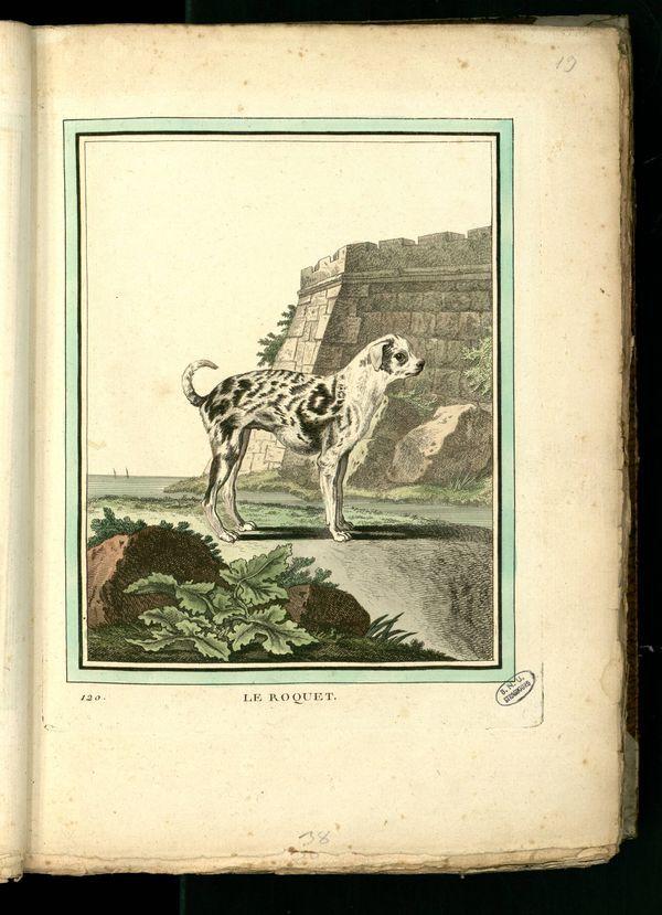 Des noms de races de chiens au XVIIIe siècle Gravur20