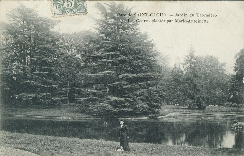 Les cèdres de Marie-Antoinette, jardin du Trocadéro, parc de Saint-Cloud Img82810