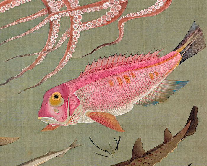 Exposition : Jakuchū (1716-1800), le Royaume coloré des êtres vivants Jokuch10