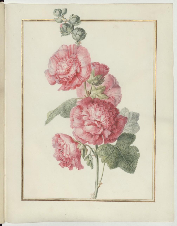 "Madeleine-Françoise Basseporte (1701-1780), première femme "" Peintre du jardin du Roi "" Recuei30"