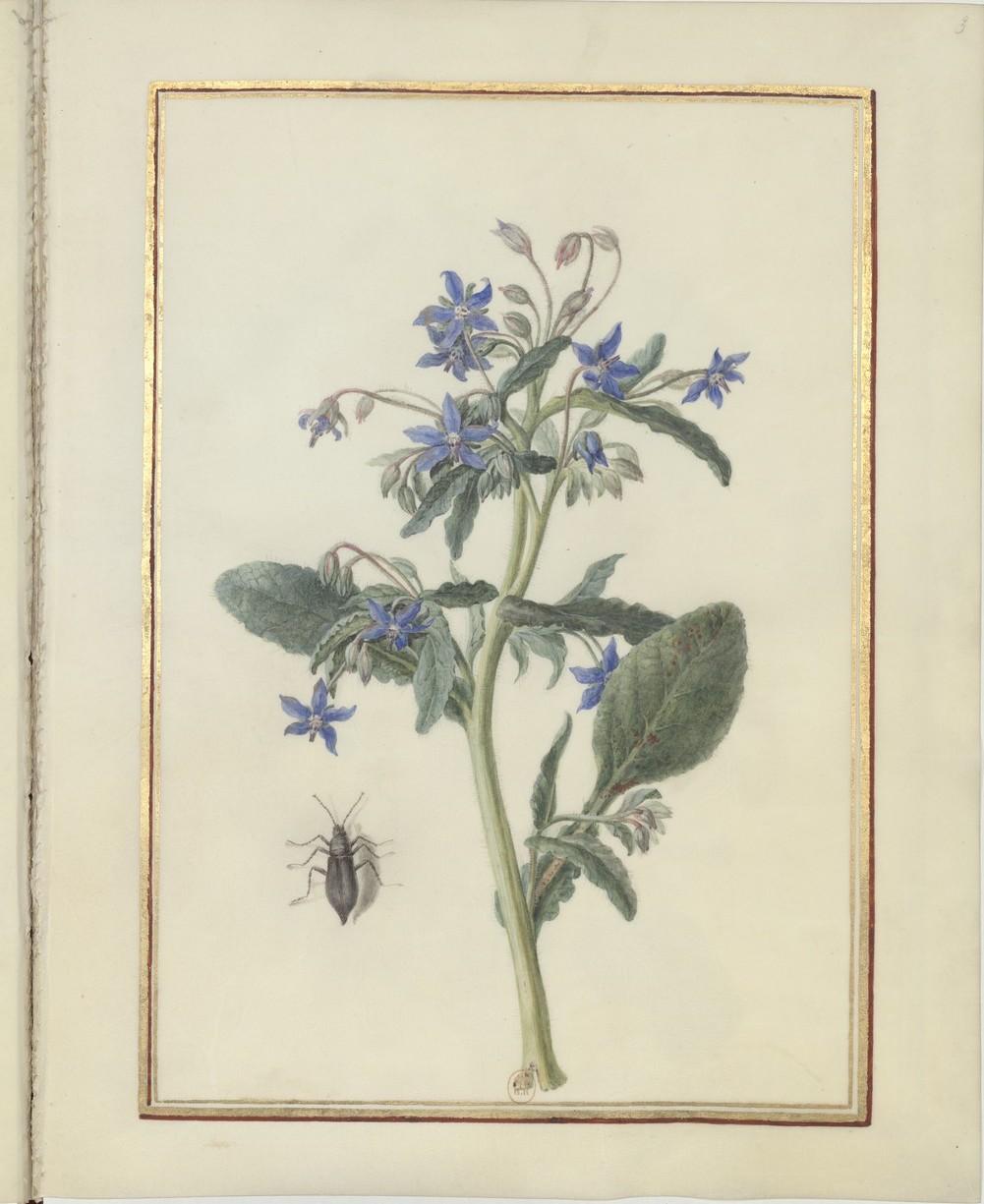 "Madeleine-Françoise Basseporte (1701-1780), première femme "" Peintre du jardin du Roi "" Recuei32"