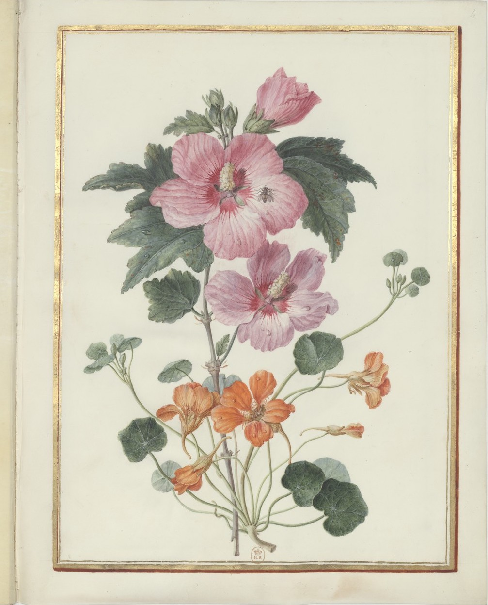 "Madeleine-Françoise Basseporte (1701-1780), première femme "" Peintre du jardin du Roi "" Recuei34"