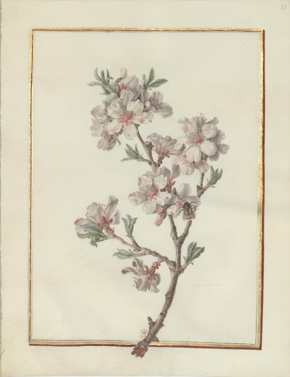 "Madeleine-Françoise Basseporte (1701-1780), première femme "" Peintre du jardin du Roi "" Recuei35"