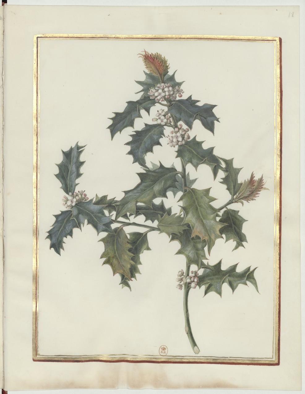 "Madeleine-Françoise Basseporte (1701-1780), première femme "" Peintre du jardin du Roi "" Recuei40"