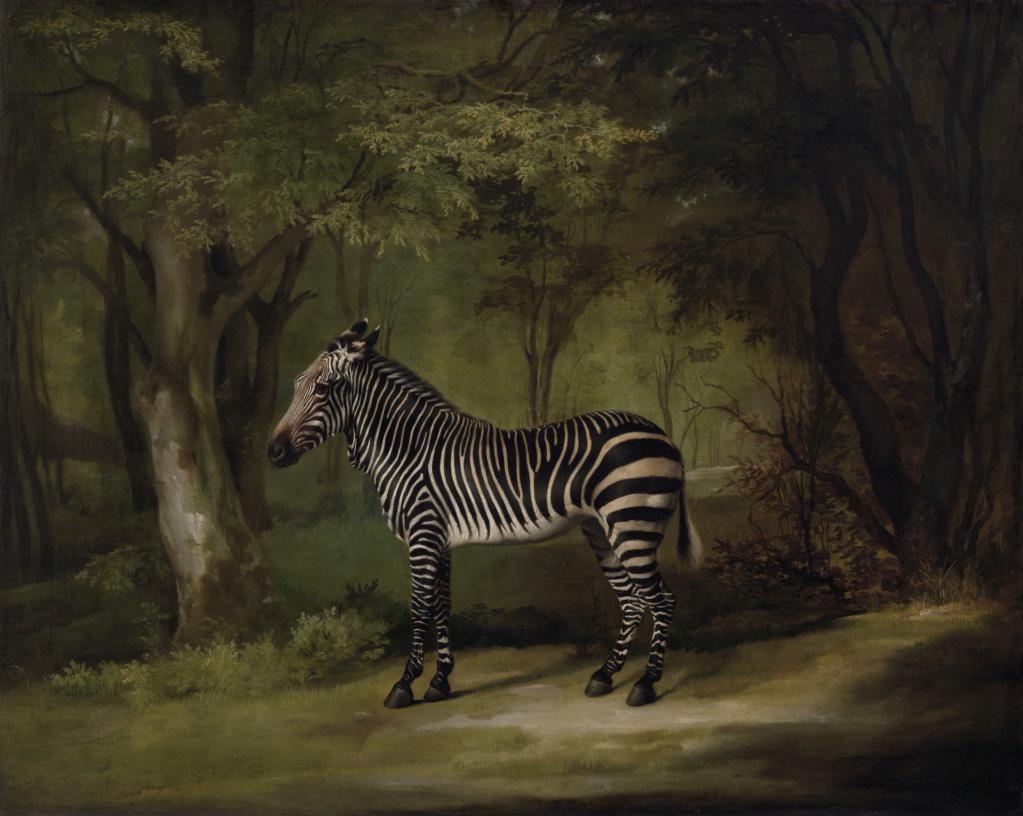 George Stubbs : artiste peintre et anatomiste.  Zebra_10
