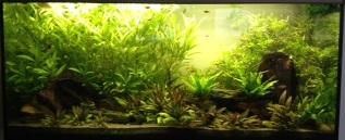Ma passion pour les plantes aquatiques! Signat10