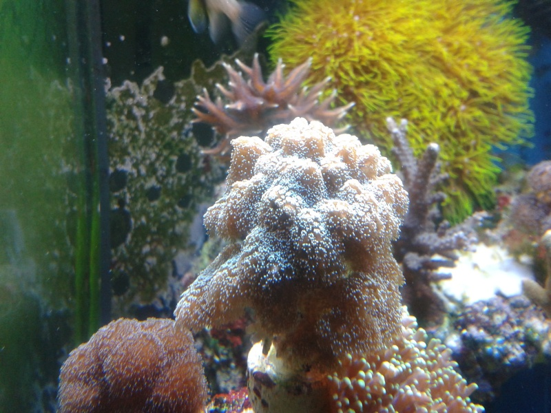 avis pour reconnaissance de coraux 20131210