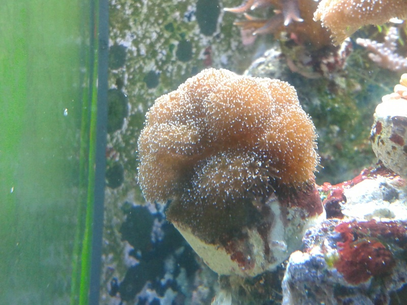 avis pour reconnaissance de coraux 20131211
