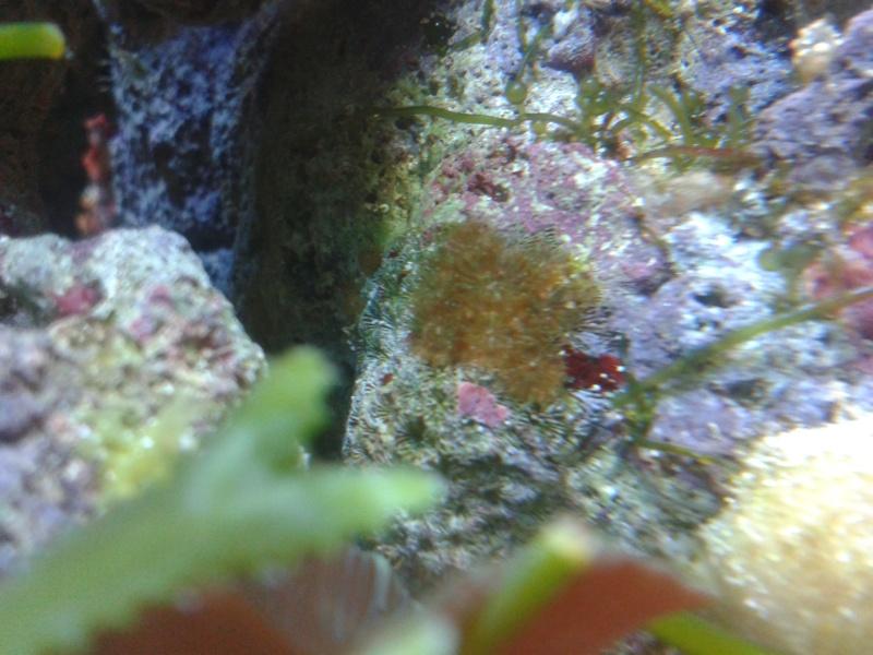 avis pour reconnaissance de coraux 20131213
