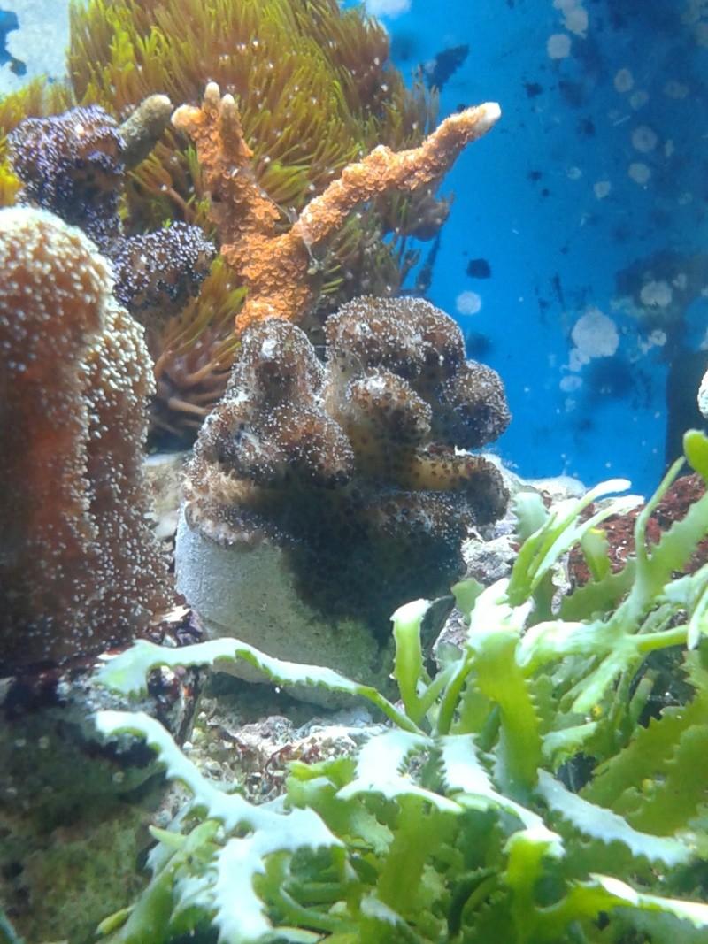 avis pour reconnaissance de coraux 20131215
