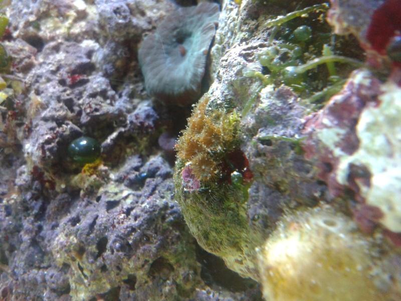 avis pour reconnaissance de coraux 20131217