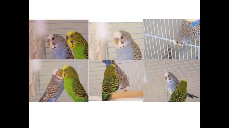 Bella et Flash ( Sexage Bella ) Images10