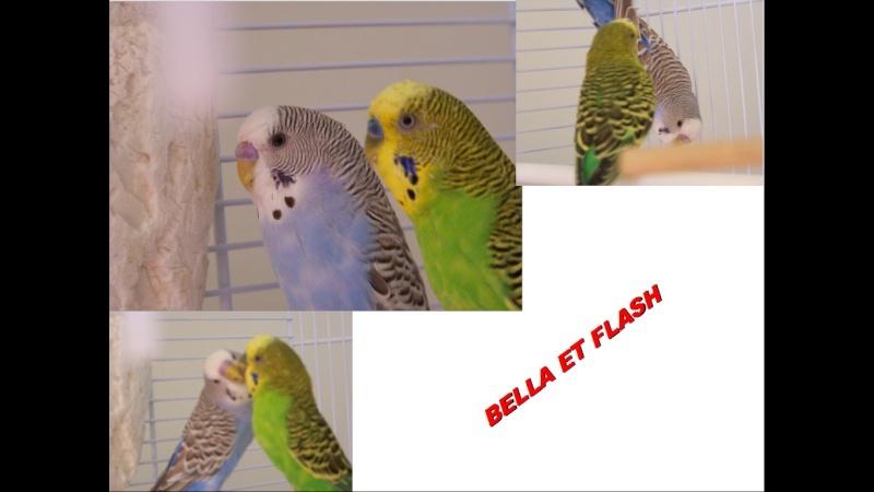 Bella et Flash ( Sexage Bella ) Images11