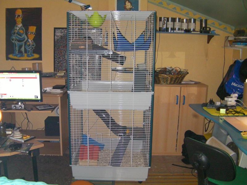 Présentation de mes ratounets Sany0017