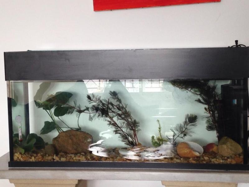 mon nouveau aquarium de 100 litres  14773712