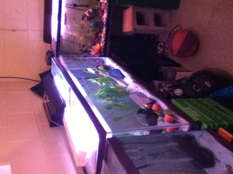 my lil fish room  Photo_34