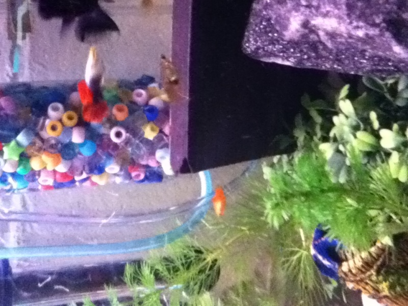 my lil fish room  Photo_37