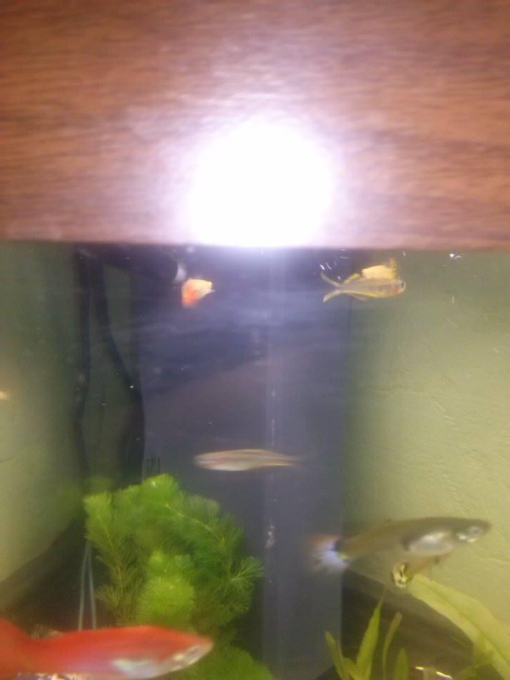 varieté de poisson 16533910