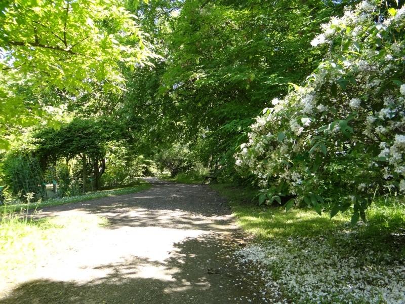 enchantement au jardin botanique Dsc07710