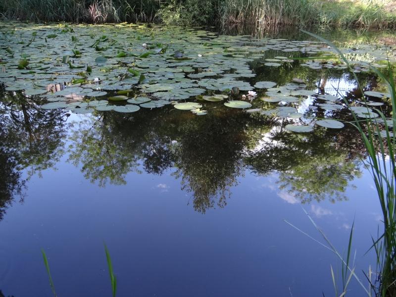 enchantement au jardin botanique Dsc07711