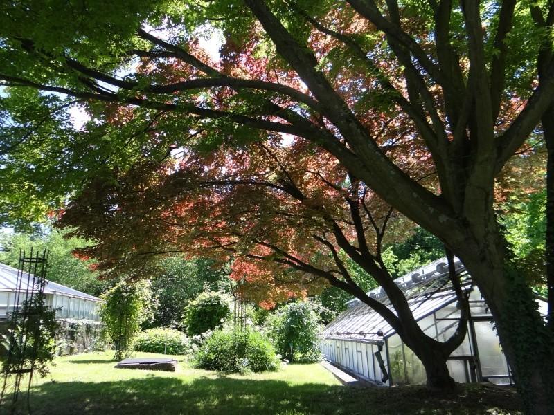 enchantement au jardin botanique Dsc07714