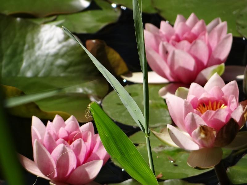 enchantement au jardin botanique Dsc07718
