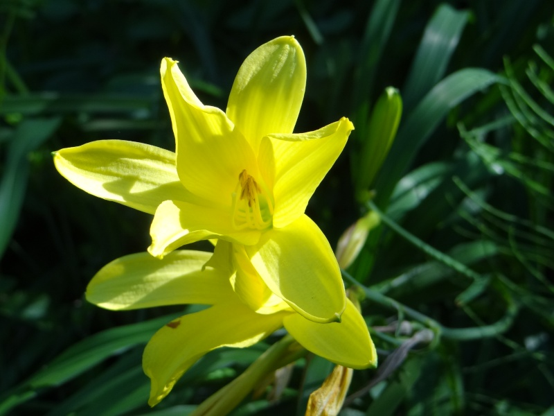 enchantement au jardin botanique Dsc07810