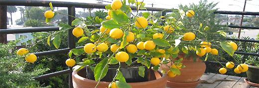 --Limun---- 126