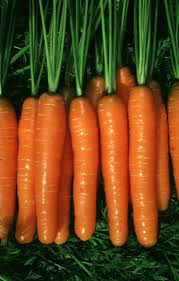 Mrkva-- Daucus carota A127