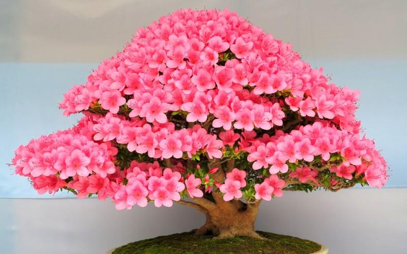 Slike bonsaia.. B310