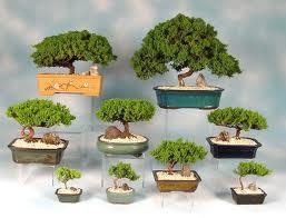 Bonsai: Male tajne uzgoja i održavanja mini-drveća Bonsai10