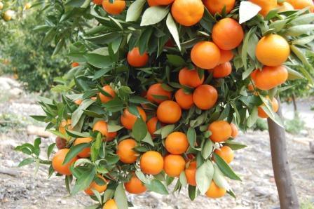 ---Mandarina--- Mandar10